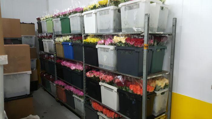 Свежесрезанные цветы оптом в куньмине, цветов новокосино