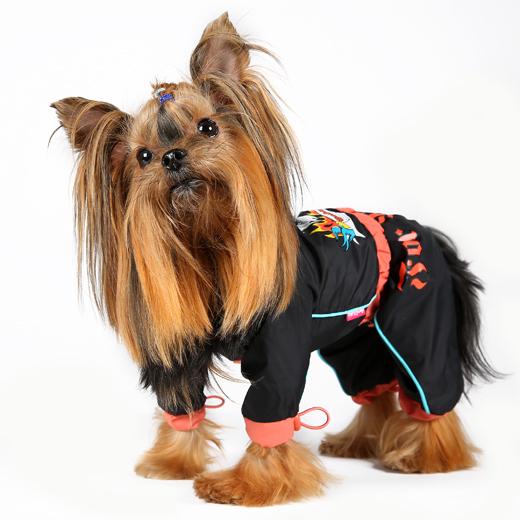 Одежда для собак иваново